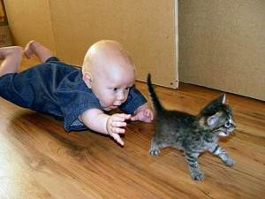 Big fun for Junior, not so much for kitten junior