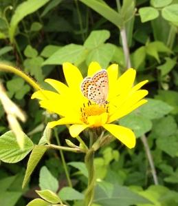 even butterflies practice stillness at times